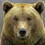 TheBear Profile Picture